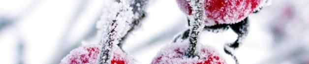 cereja congelada